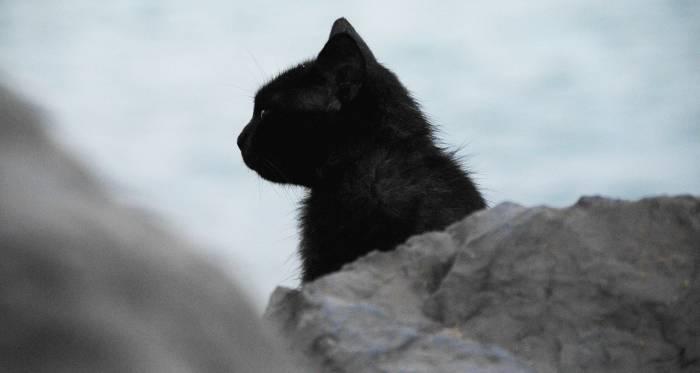 Kucing hitam pembawa sial?
