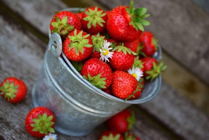 Berbagai Pilihan Makanan Organik untuk Anak