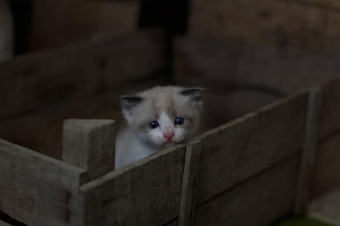 Ilustrasi kucing kecil lucu.