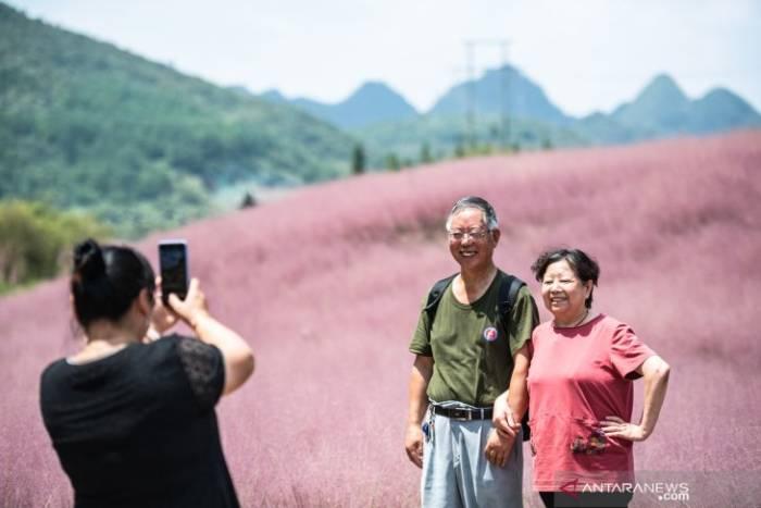 Wisatawan berpose di tengah padang rumput berwarna pink (Muhlenbergia capillaris)