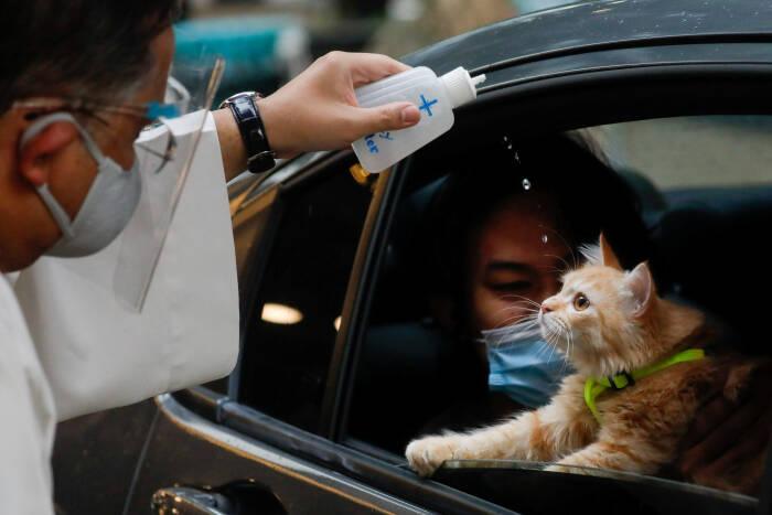 Pemberkatan hewan peliharaan di Filipina dalam Hari Satwa Sedunia.