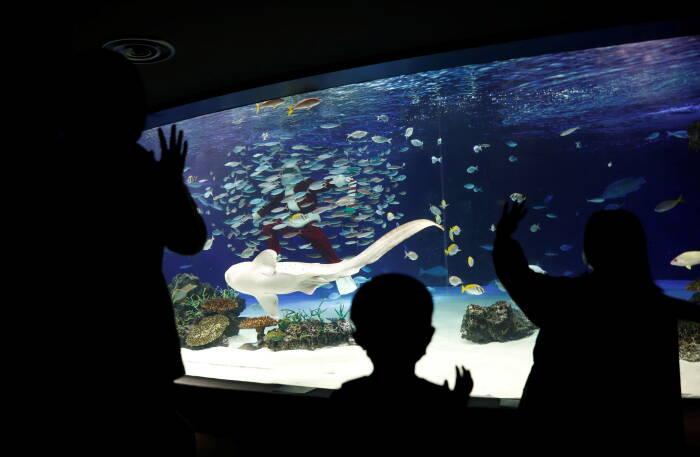 Atraksi penyelam berkostum Sinterkas di akuarium Tokyo